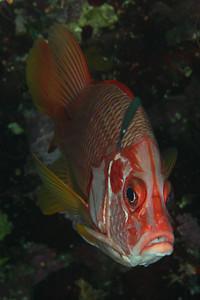Red Sea  Nov 2010