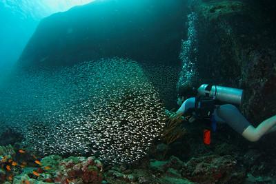 Glass fish diver